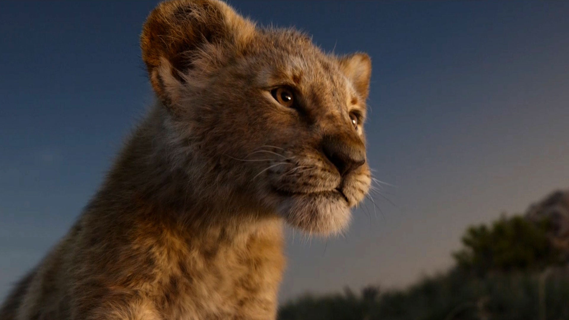Simba The Lion King Wallpapers Details About The New Lion